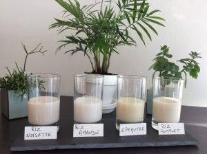 Read more about the article «Quoi faire avec les boissons végétales ?»… en résumé !